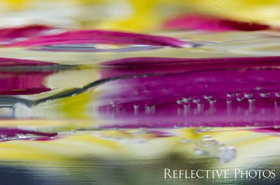 Through the Floating Flower Glass
