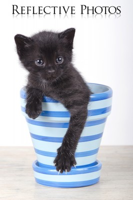 Growing a Kitten