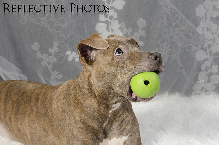 """Gracie's favorite toy is this ball she found on the side of the road during one of our walks and brought home. """"Ok I posed for the camera, Dad, can we play ball now?"""""""