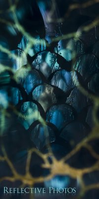 Abstract photography that shows a dark scaly object trapped behind a golden web.