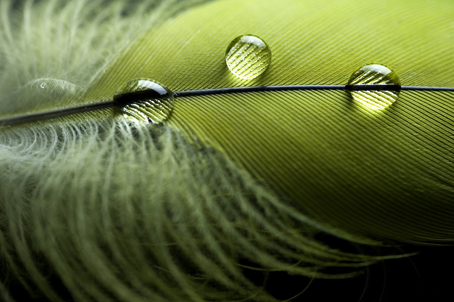 Water Beads Upon a Feather