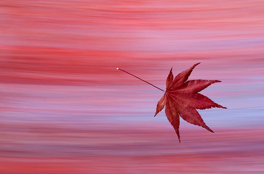 A Fiery Red Fall